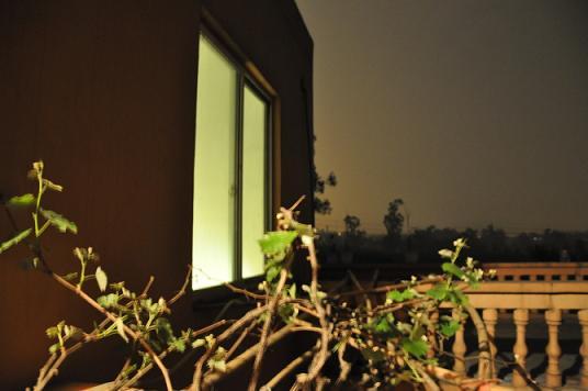 进入房门阳台上的葡萄树已经长出了长长的枝条